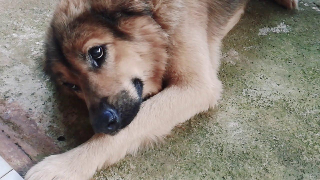 Morning beside cute dog