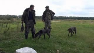 Охота на утку в Украине(, 2015-08-14T11:21:44.000Z)