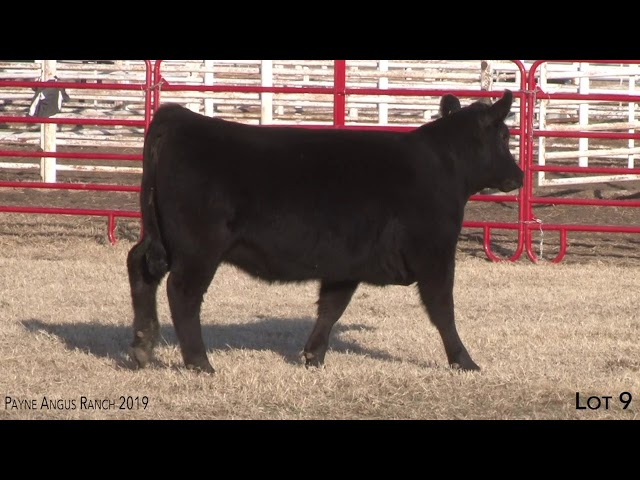 Payne Angus Ranch Lot 9