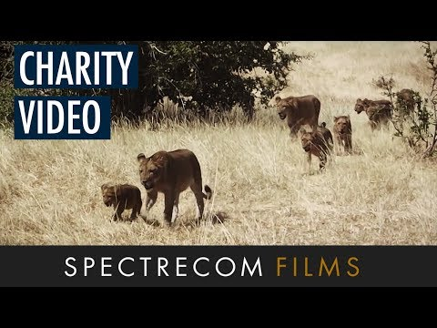 2014 Tusk Awards Nominee for Conservation in Africa - Amy Dickman | Spectrecom Films