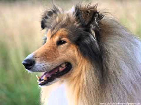Dog,dog breeds,a dog's way home,dog park,dog the bounty hunter,dog breeds,dog whistle,dog grooming,dog beds