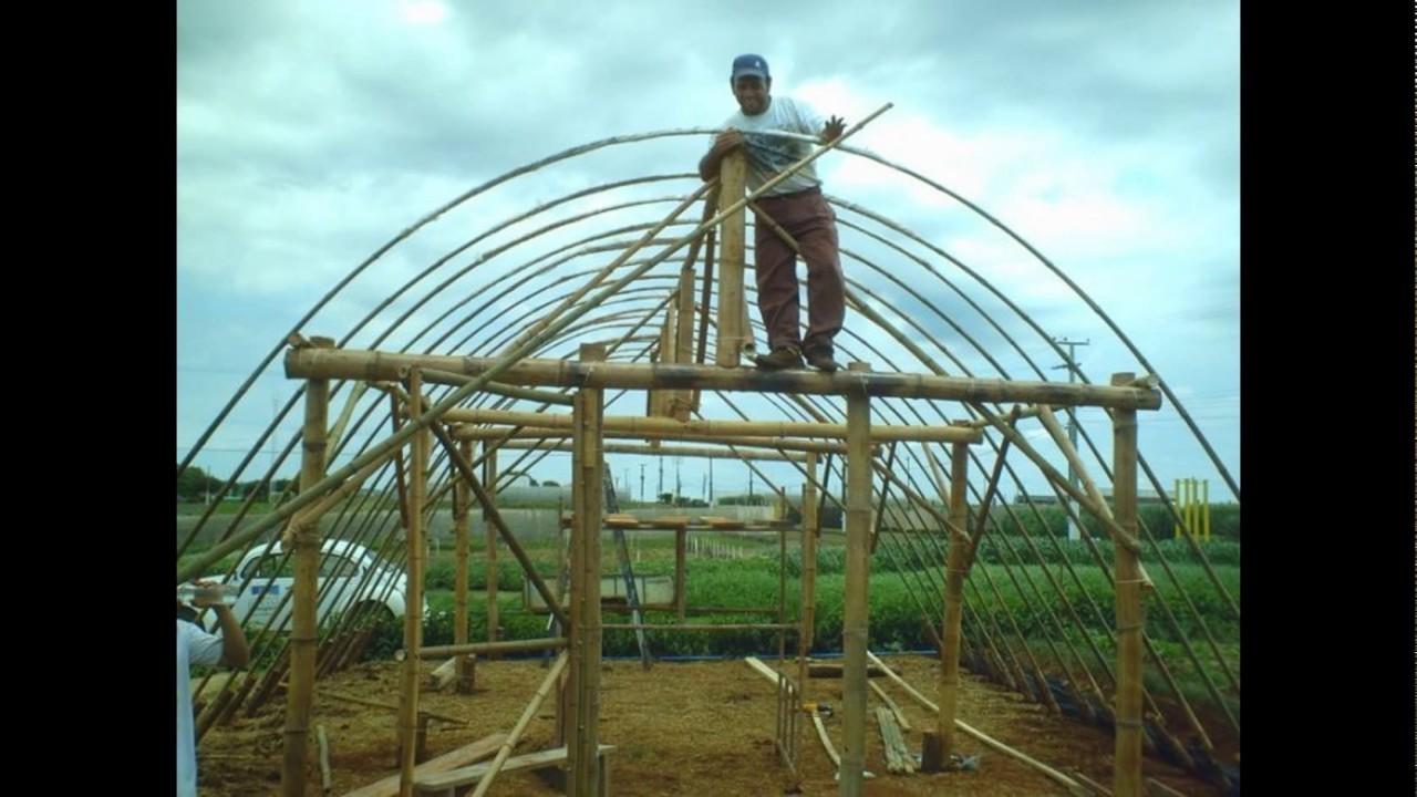 Resultado de imagem para estufas de bambu