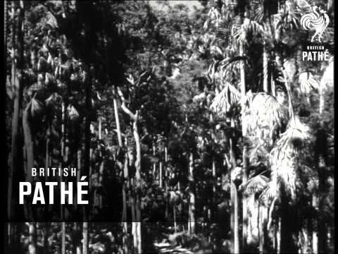 Mackay Queensland - Australia (1946)