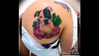Фото тату питбультерьер - рисунки готовых татуировок на фото