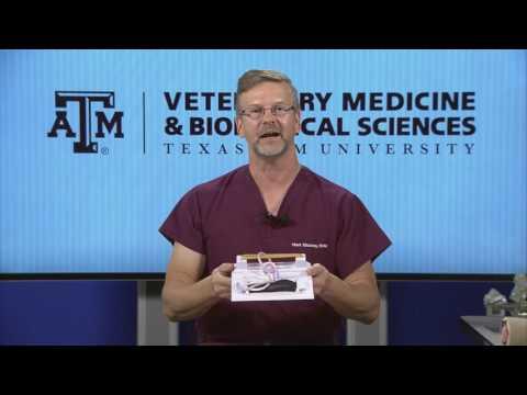 Modern Careers In Veterinary Medicine