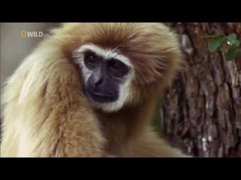 Nat Geo Wild - Wild Thailand - National Geographic Animals