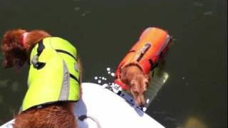 Load-A-Pup in action -- our two dogs using it on our boat