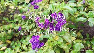Relaxing Piano Music 1: Reading Music, Working Music, Sleep Music, Meditation Music - Marigold