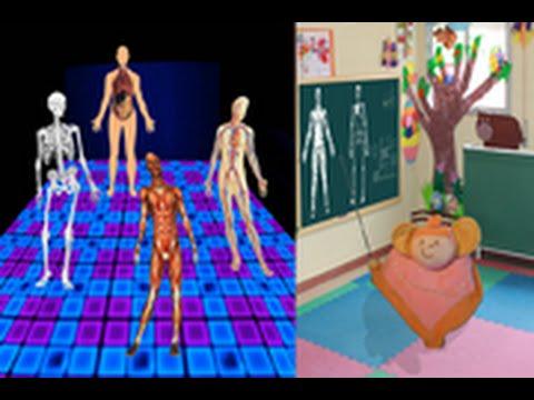 Anatomía divertida - YouTube