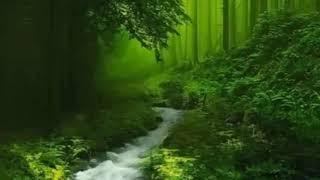 Nhạc Thiền Thư Giãn - Sáo Trúc ( shakuhachi ) tiếng suối chảy âm thanh thiên nhiên