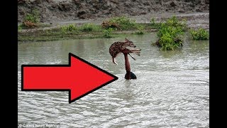 When He Saw This Baby Deer Floating Down A Swollen River After A Flood, He Knew He Had To Do Somethi