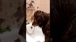 Понять, помыть и отпустить