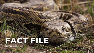 Facts about the Python