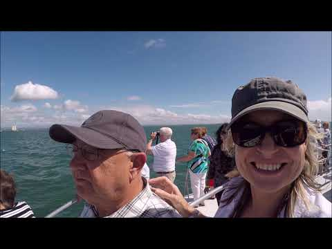 Whale watching gladstone queensland
