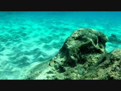 Reserva Marina del Migjorn de Mallorca
