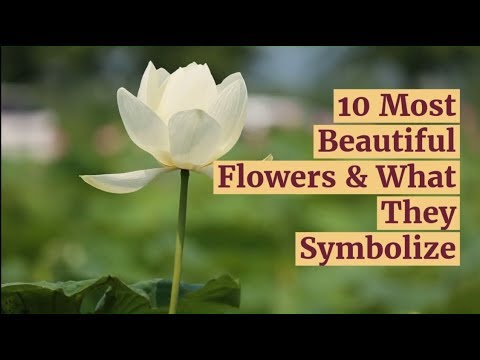 10 Most Beautiful Flowers & What They Symbolize
