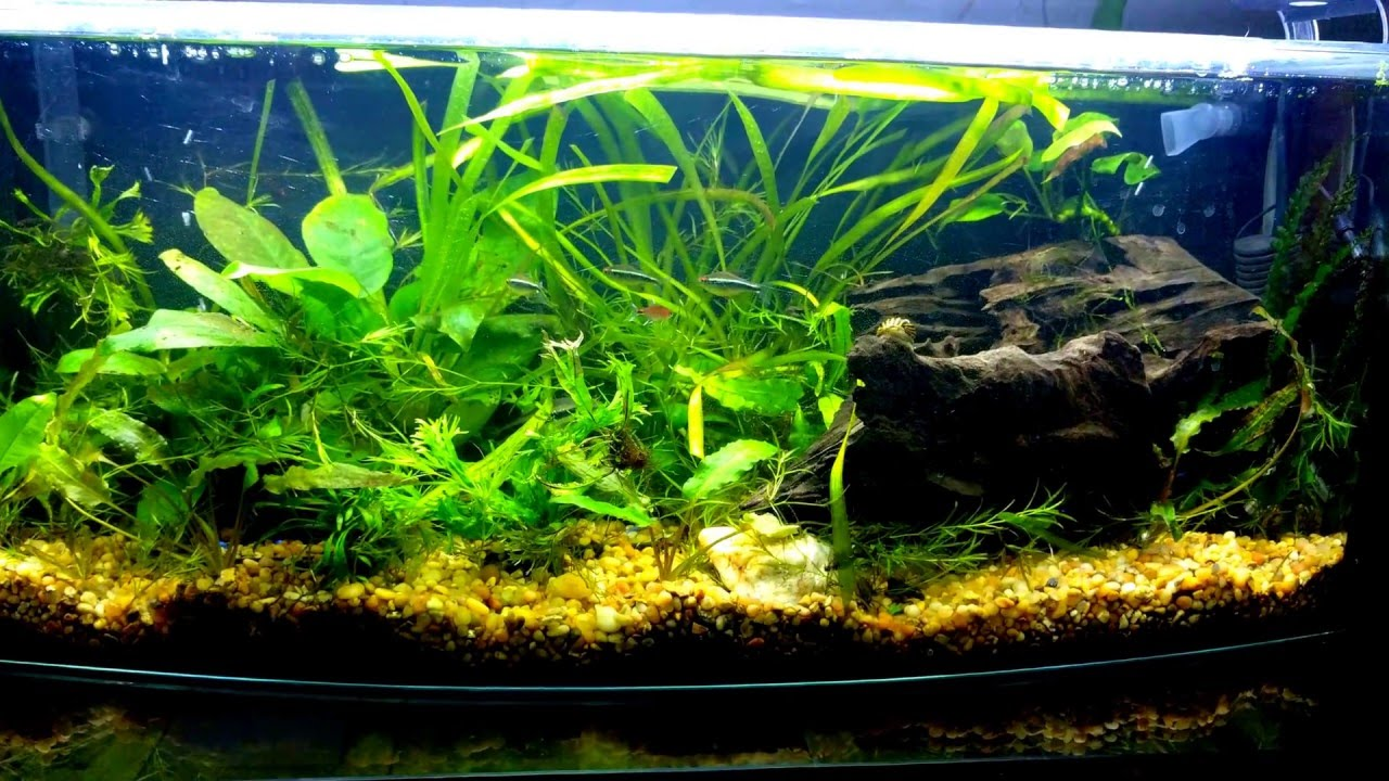 Betta aquarium with perfect tank mates other fish and for Tank mates for betta fish