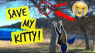 CAT STUCK IN TREE !!!