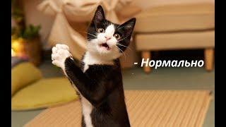 Коты ругаются на хозяйку. (18+)