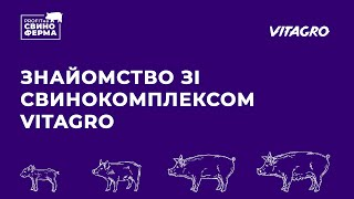 PROFITна свиноферма#1 | Передові технології | Отримання прибутків | досвід VITAGRO | Куркуль