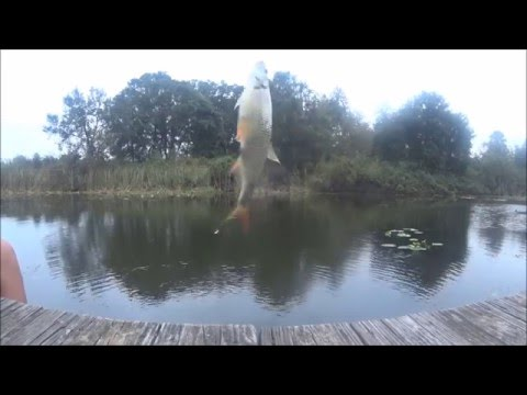 Shiner fishing in a Florida canal
