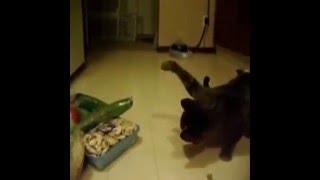 Коты боятся огурцов/CATS VS CUCUMBERS