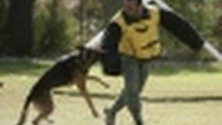 Dubai Police Dogs