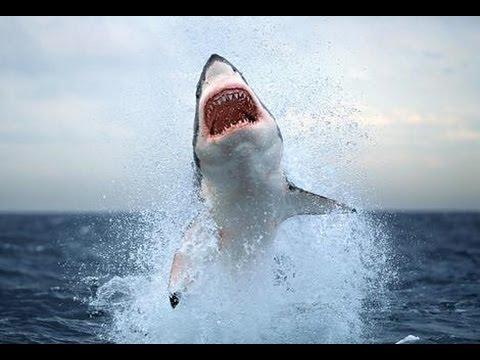 Нападение акулы. Приморский
