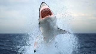 Нападение акулы. Приморский край 2011(Punga&Co представляет. Хасанский район, Приморский край Август 2011 Расказ очевидца о нападении акулы. More..., 2011-09-22T20:17:33.000Z)