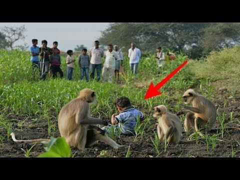Bocah 2 Tahun Hidup Dengan Gerombolan Monyet!! Faktanya Mencengangkan...