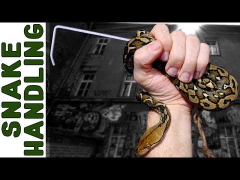 Snake Training [Lifelong Expert Shares All]