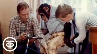 Великий укротитель Художественный фильм 1974