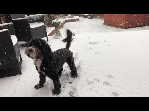 Adorable Dog Excited To Play In The Snow