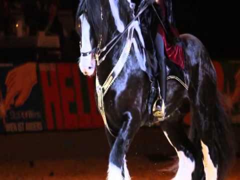 Shire Horse Oak´y & Diana Adam