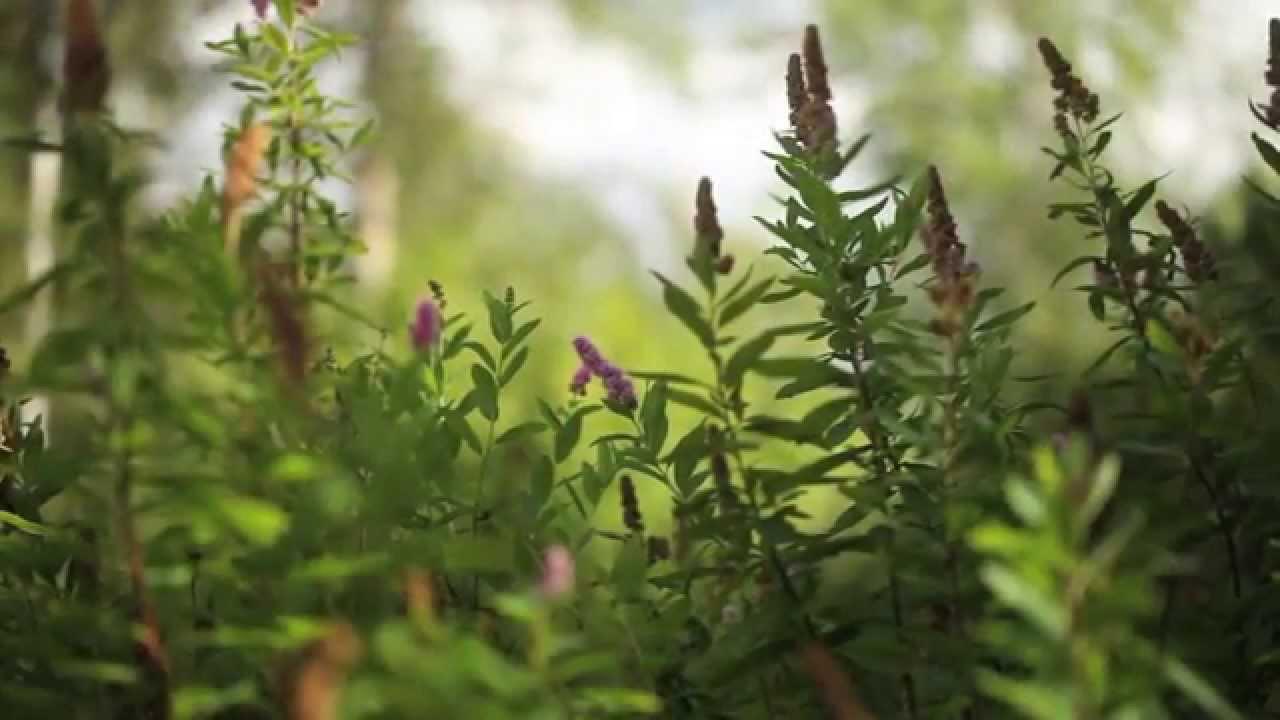 Peter korn trädgården och odla i sand by odlingstv   2016 04 14