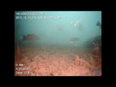 Deployment of micro-ROV at Liberty Ships artificial reef