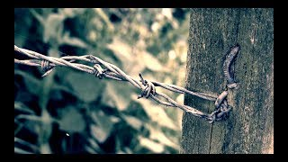 BEYOND ATLANTIS - Songbird (Official Lyric Video)