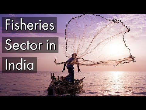 Fisheries Sector In India - Salient Features Of Fisheries Infrastructure Development Fund Explained