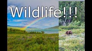 Wildlife Viewing in Glacier National Park