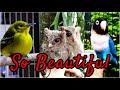 Kumpulan Suara Burung Yang Sangat Indah Dan Merdu Dilengkapi Foto Yang Sangat Indah  Mp3 - Mp4 Download