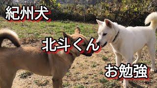 次回保護犬達とふれあいバーベキュー! 日時:2019年1月27日(日)AM11:00...