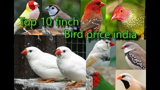 Top 10 finch bird price india