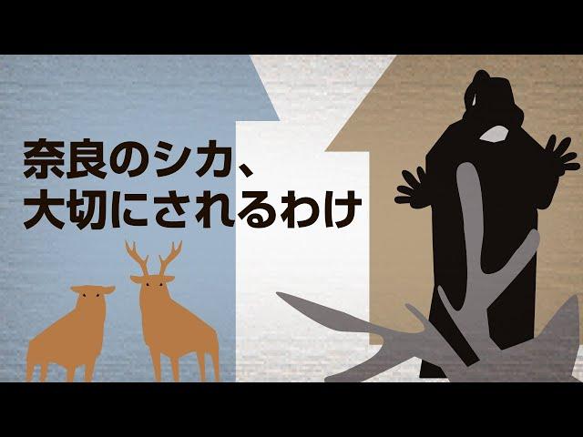 奈良のシカ、なぜ大切に守られる? ことわざの由来にも