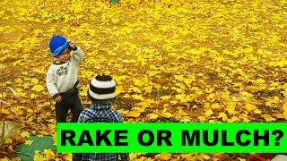 Should you mulch leaves into your lawn or rake them up