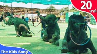 เพลงช้าง | ช้างสุรินทร์ | รวมเพลงเด็ก 20 นาที - The Kids Song