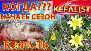 Рыбалка на кефаль Приметы и рыбалка Когда начать сезон на кефаль когда ловить где ловить кефаль