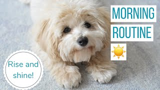 ROSCO'S MORNING ROUTINE   Life With a Maltipoo Puppy