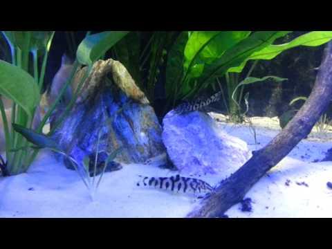 New 30g Jewel asian planted tank