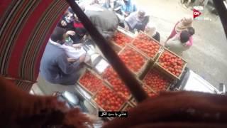 المخبر: تجار الطماطم بيدافعوا عن جشعهم بكل شراسة