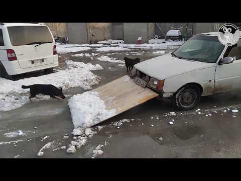 #Как Армяни #чистят снег